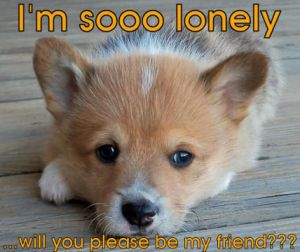 I--m-So-Lonely---I-Don--t-Have-Any-Friends--Please-Help---I--m-So-Lonely-----You-Will-Please-Be-My-F